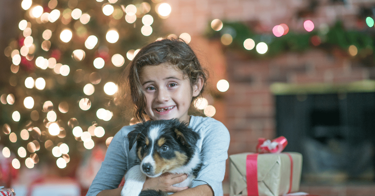 Pet Safety Tips For The Holiday Season – Shield Insurance Agency Blog