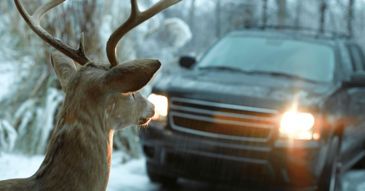 Don't Hit The Deer In The Headlights – Shield Insurance Agency Blog
