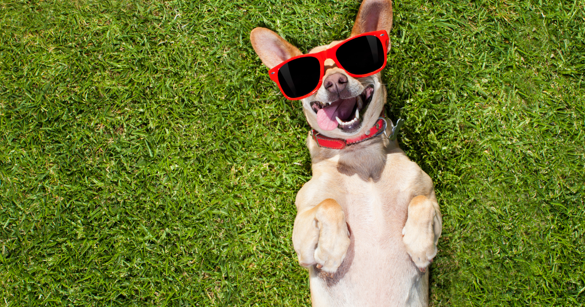 Why Do Dogs Eat Grass - Shield Insurance Agency Blog