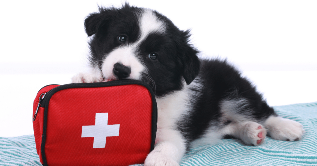 When Disaster Strikes What to Put in Your Medication Go Bag - Shield Insurance Agency Blog