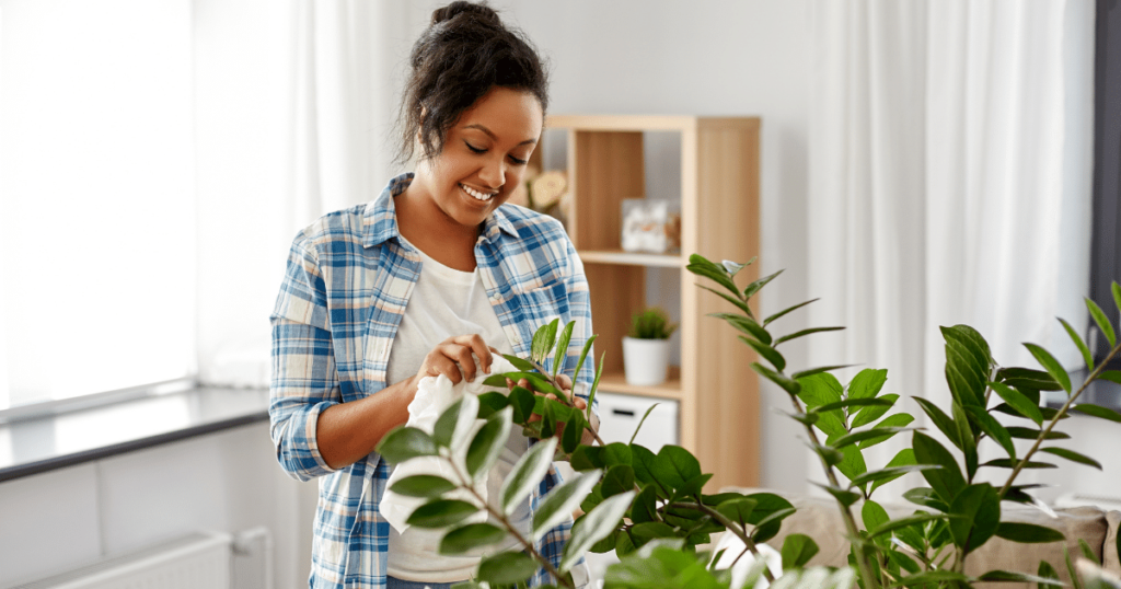 19 Mistakes People Make With Houseplants Shield Insurance Agency Blog