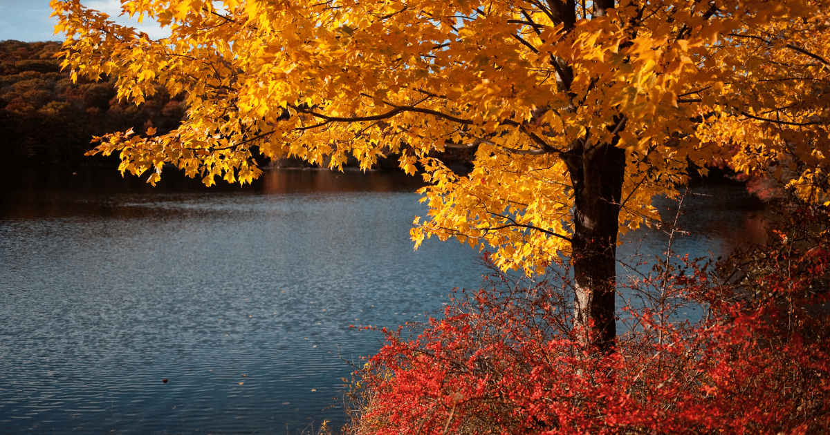 The Best Trees and Shrubs to Plant in Your Yard for Beautiful Fall Foliage - Shield Insurance Agency Blog
